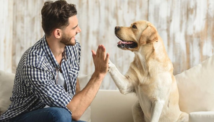 tratamientos y Medicamentos para la artrosis en perros