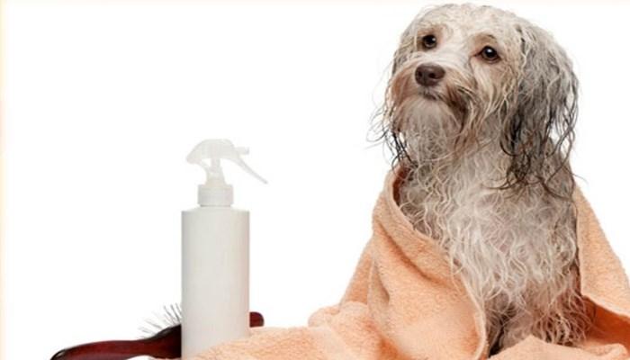 Enfermedades que producen las pulgas de los perros