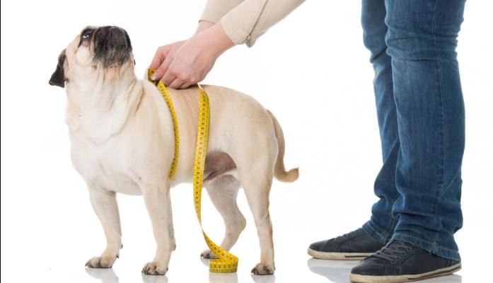 pienso para perros con sobrepeso