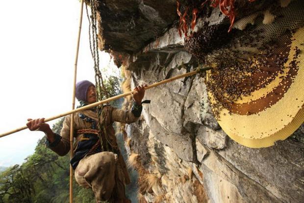 cacadores-de-mel-nepal01