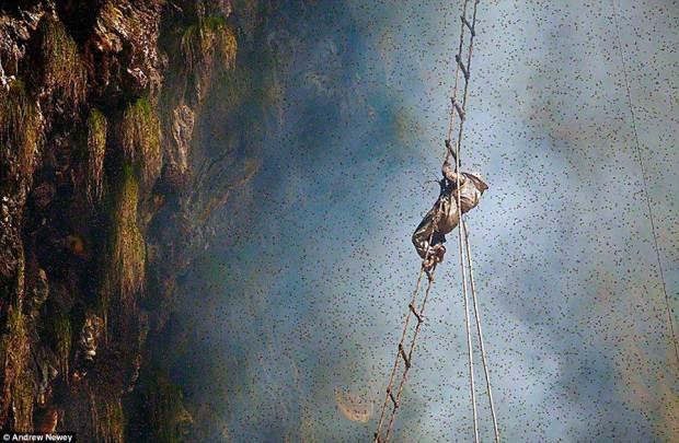 cacadores-de-mel-nepal02