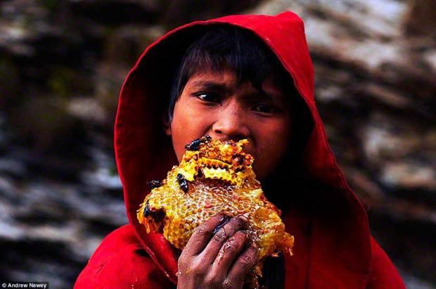 cacadores-de-mel-nepal06