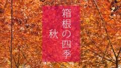 箱根の四季_秋_(C)箱根・孫三総本家・花詩