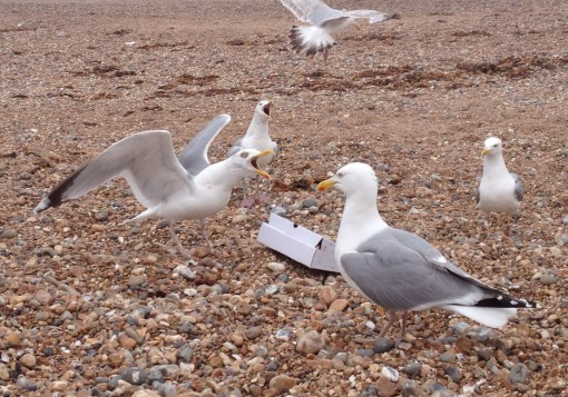 Brighton Beach, U.K.