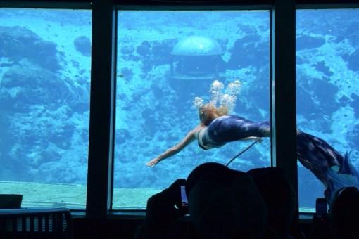 Mermaid Shows at Weeki Wachee Springs in Florida