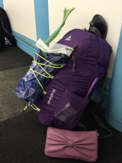"Pushing the limits of the ""free personal item"" on low cost airlines"