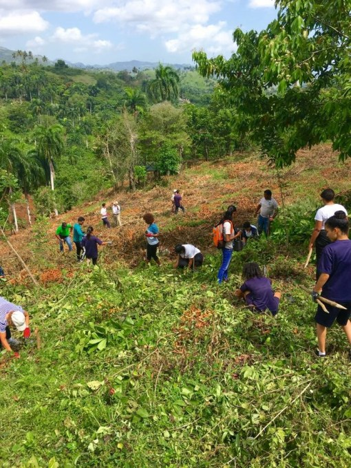 Reforestation in the Dominican Republic