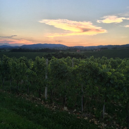 Gorgeous Slovenian Vineyards at Sunset in Metlika, Slovenia