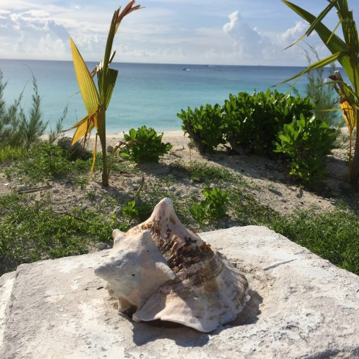 The beautiful island of Bimini in the Bahamas