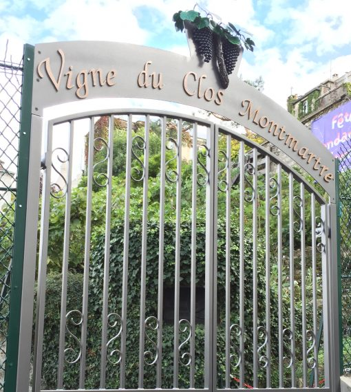 Vigne du Clos Montmartre, the only working vineyard within the city of Paris accessible only by private tour via City Discovery.