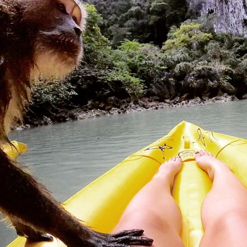 Way too close for comfort with a monkey in Phuket