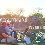 3 Ways to Save on Safari in South Africa