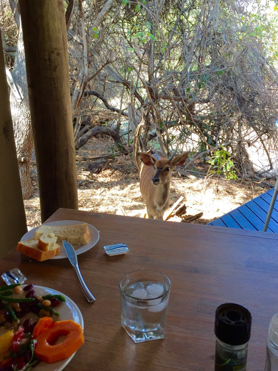 Dine with the locals at the Moditlo River Lodge in Hoedspruit, South Africa outside of Kruger National Park.
