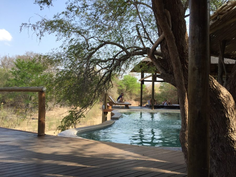 Spend your days between game drives lounging by the pool at the Moditlo River Lodge in Hoedspruit, South Africa outside of Kruger National Park.