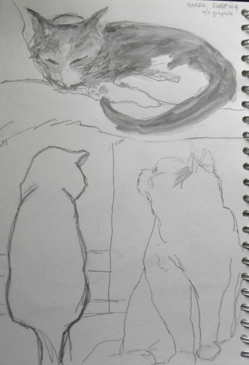 ~ Series of cats