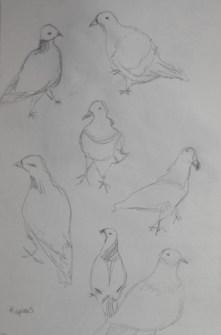 ~ Pigeons in pencil
