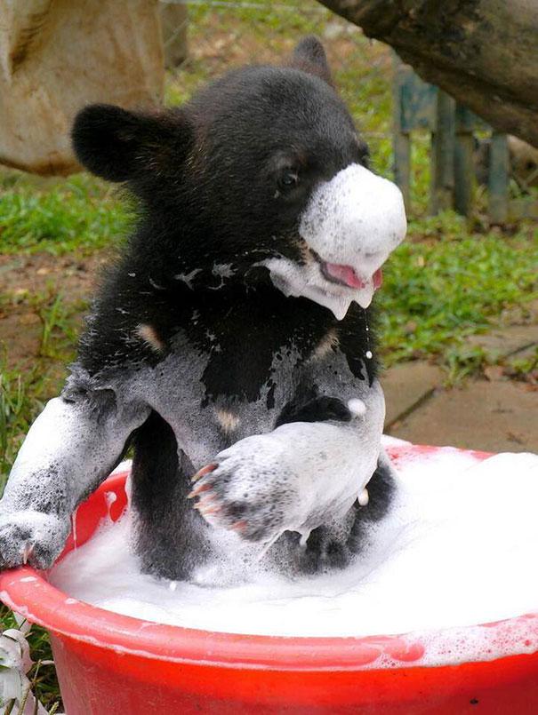2-XX-animals-that-enjoys-taking-a-bath-1__605