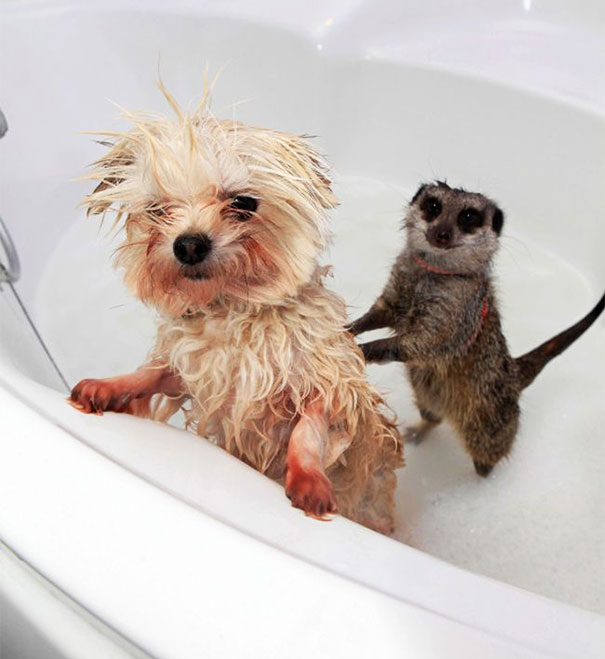 7-animals-taking-bath-14__605