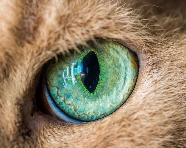 1-I-Take-Hypnotizing-Macro-Shots-Of-Cats-Eyes-Up-Close__880