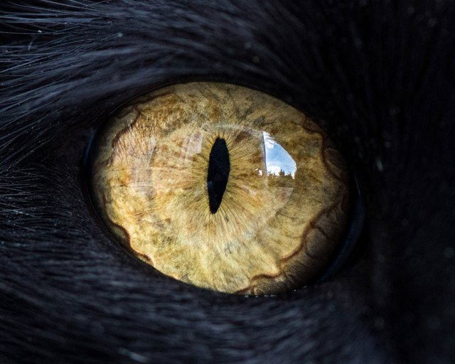 5-15-Macro-Shots-of-Cat-Eyes5__880