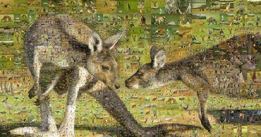 5-kanguru