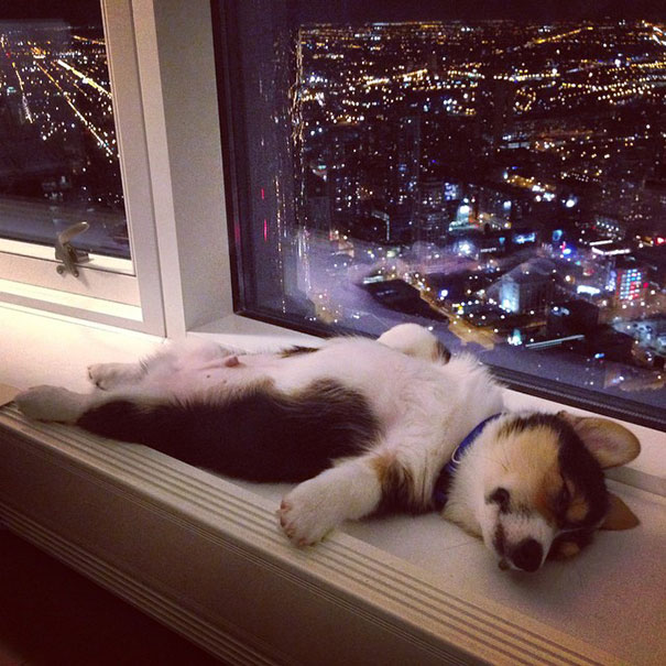 7-cute-sleeping-animals-622__605