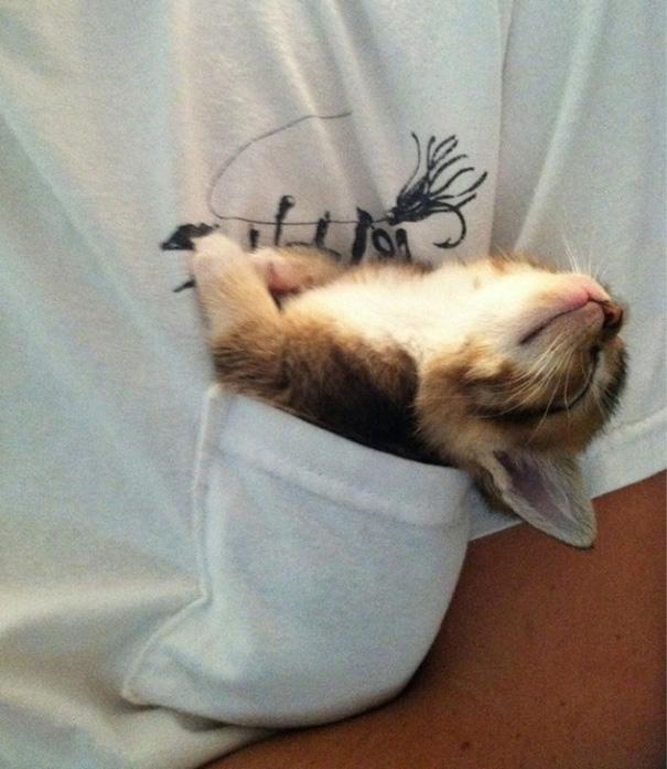 9-cute-sleeping-animals-67__605