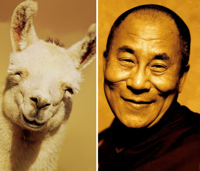 11-celebrity-look-alikes-animals-72__700
