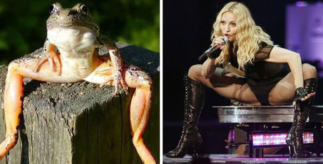 13-celebrity-look-alikes-animals-65__700