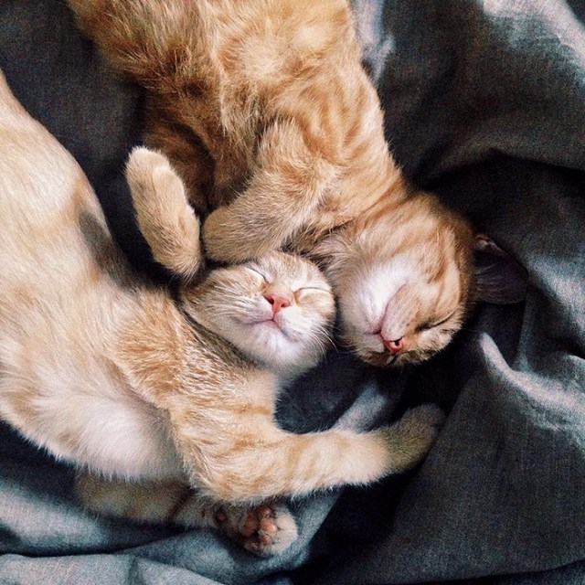 6-rescue-cats-inseparable-brothers-ginger-anyagrapes-3