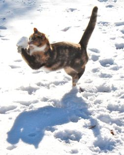 The snow attempts to escape but Hobbes does the dance and prevents the getaway