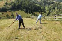 Synchronised raking