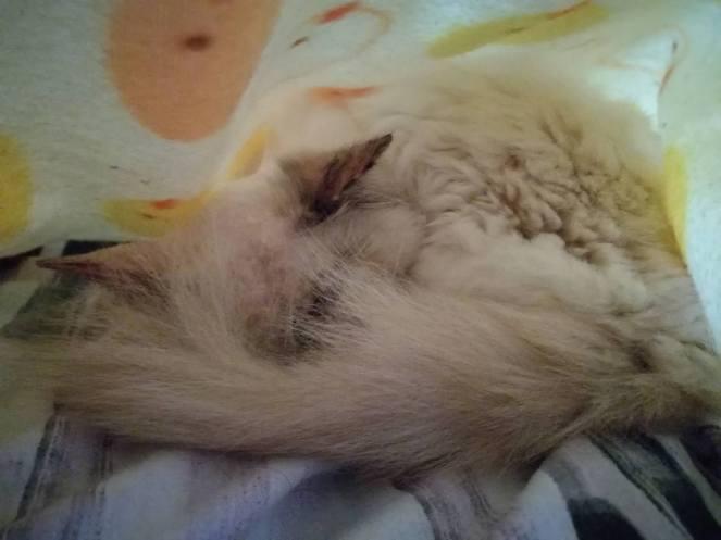 Cuddled under her blankie