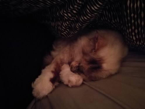 Sooo comfy!