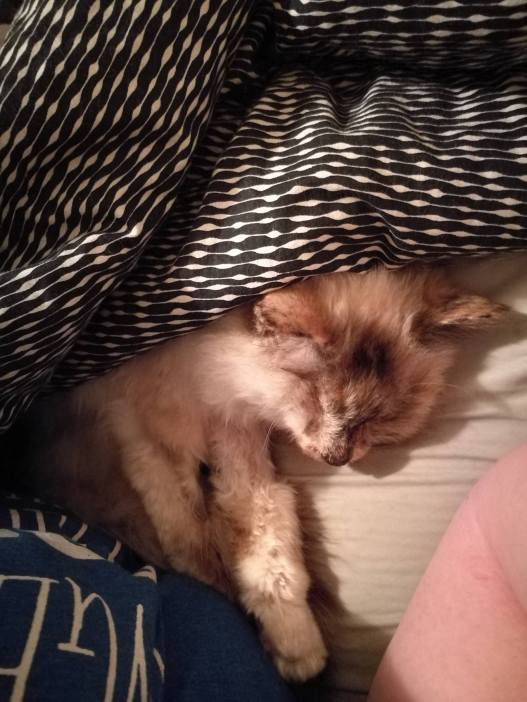 Cuddly under the covers.