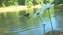 Filou der Bär, mittendrin - umringt von seinen Tennisbällen 😉