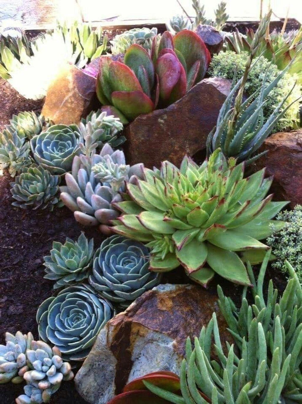 Incredible Cactus Garden Landscaping Ideas Best For Summer 05