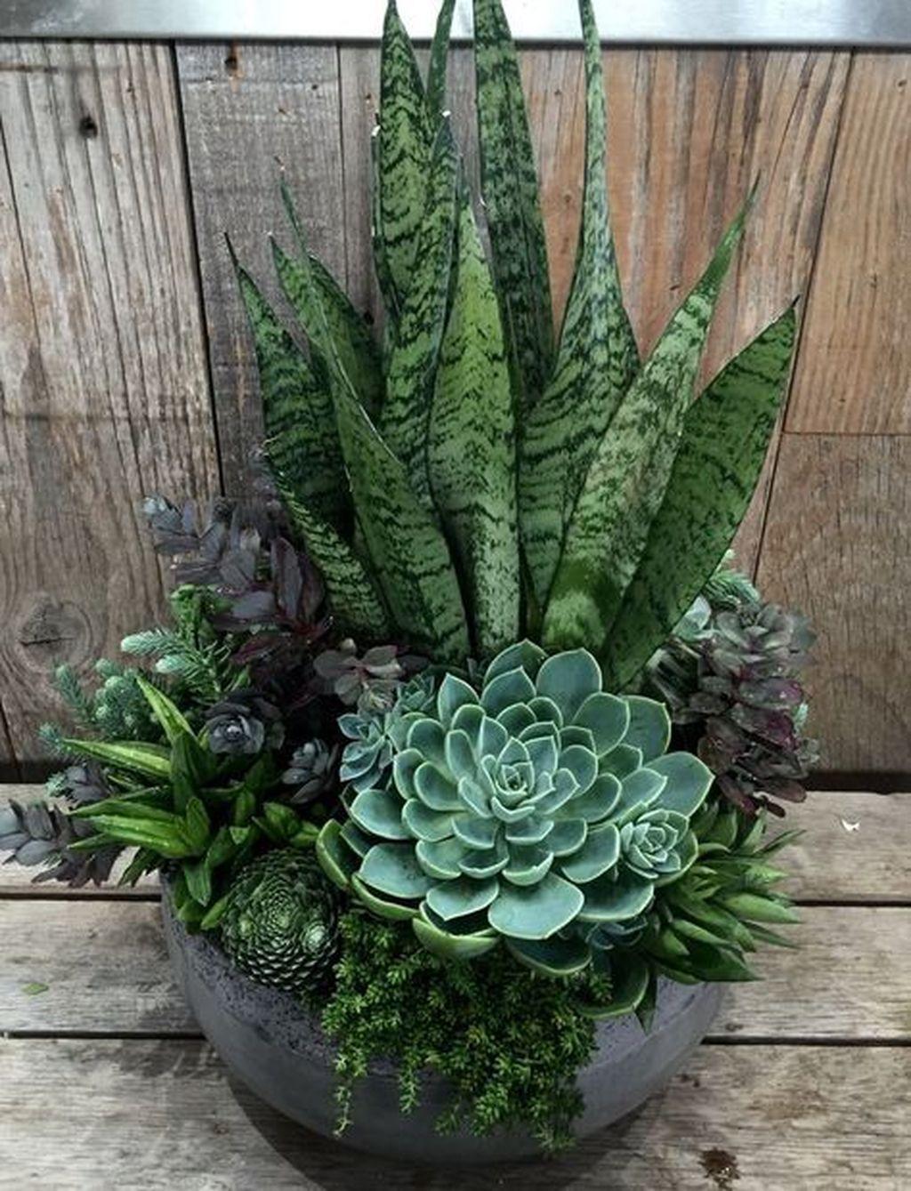 Incredible Cactus Garden Landscaping Ideas Best For Summer 22