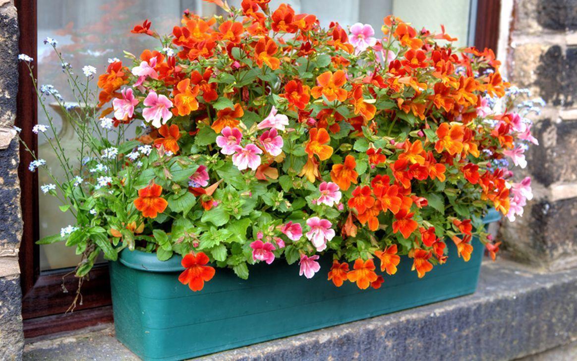 Beautiful Fall Window Boxes Design Ideas 08
