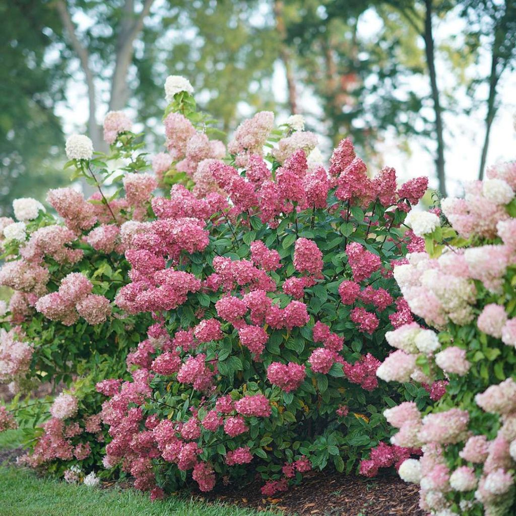 Beautiful Hydrangea Design Ideas Landscaping Your Front Yard 01