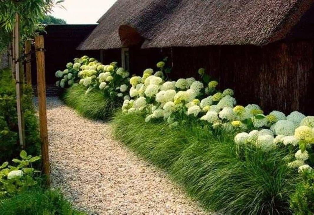 Beautiful Hydrangea Design Ideas Landscaping Your Front Yard 18