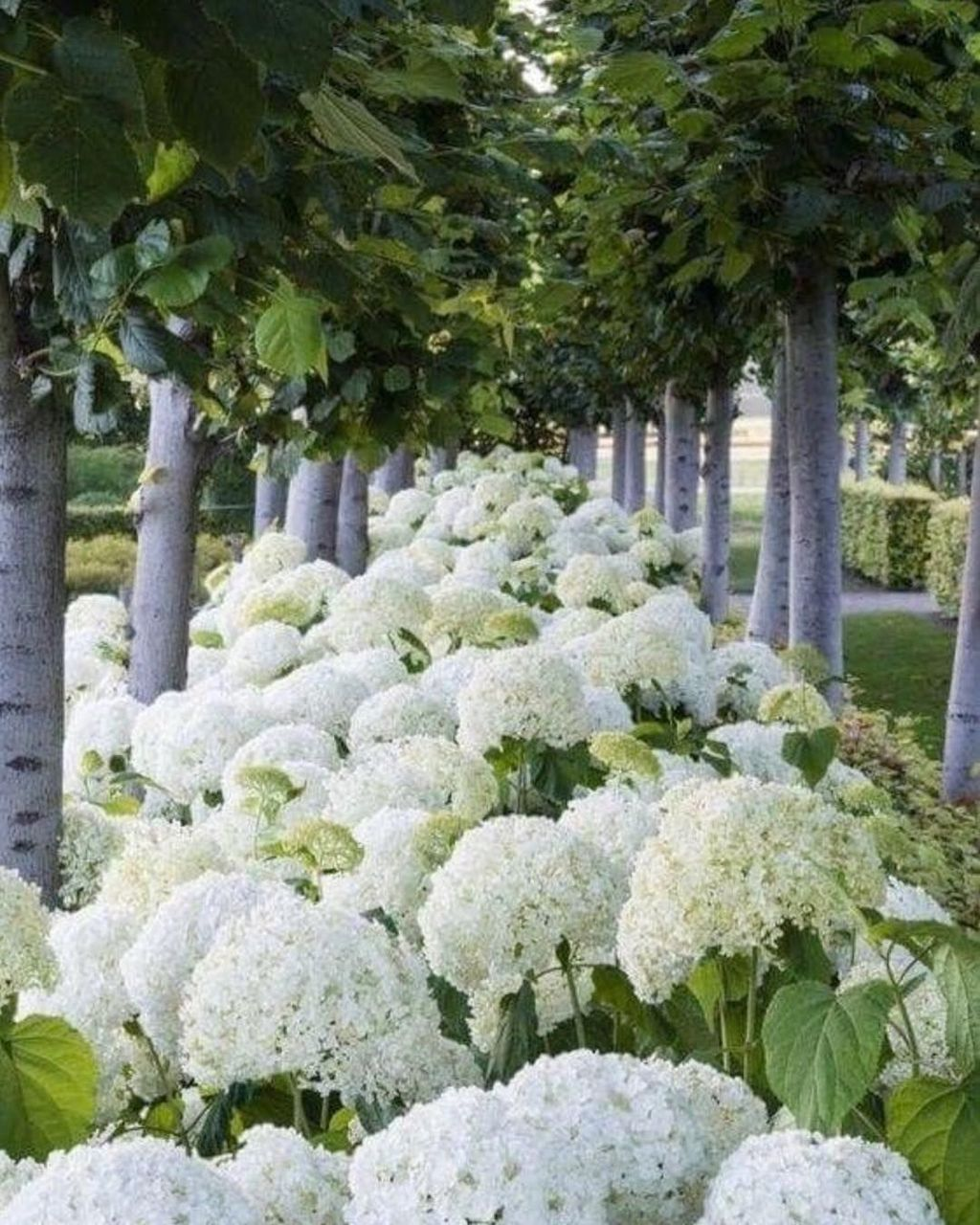 Beautiful Hydrangea Design Ideas Landscaping Your Front Yard 24