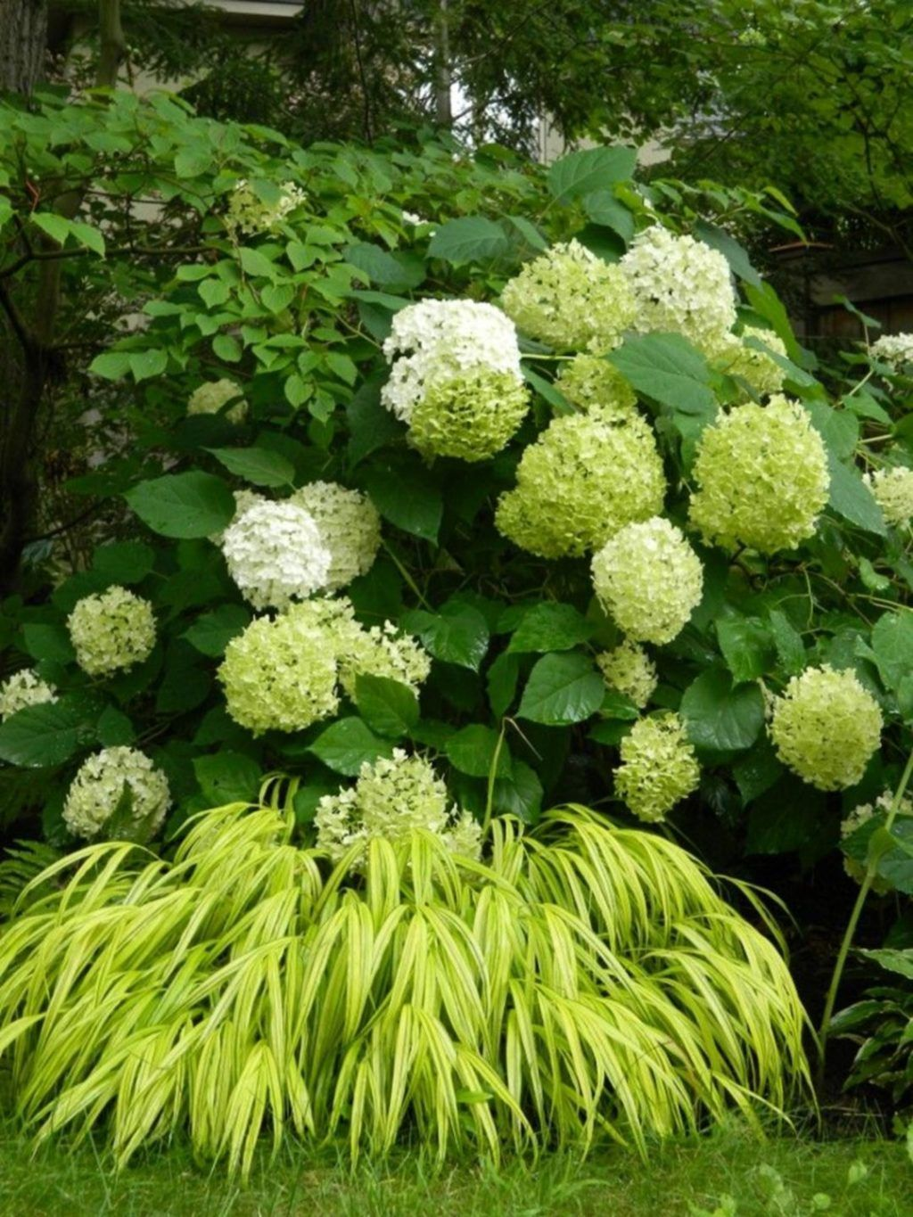 Beautiful Hydrangea Design Ideas Landscaping Your Front Yard 27