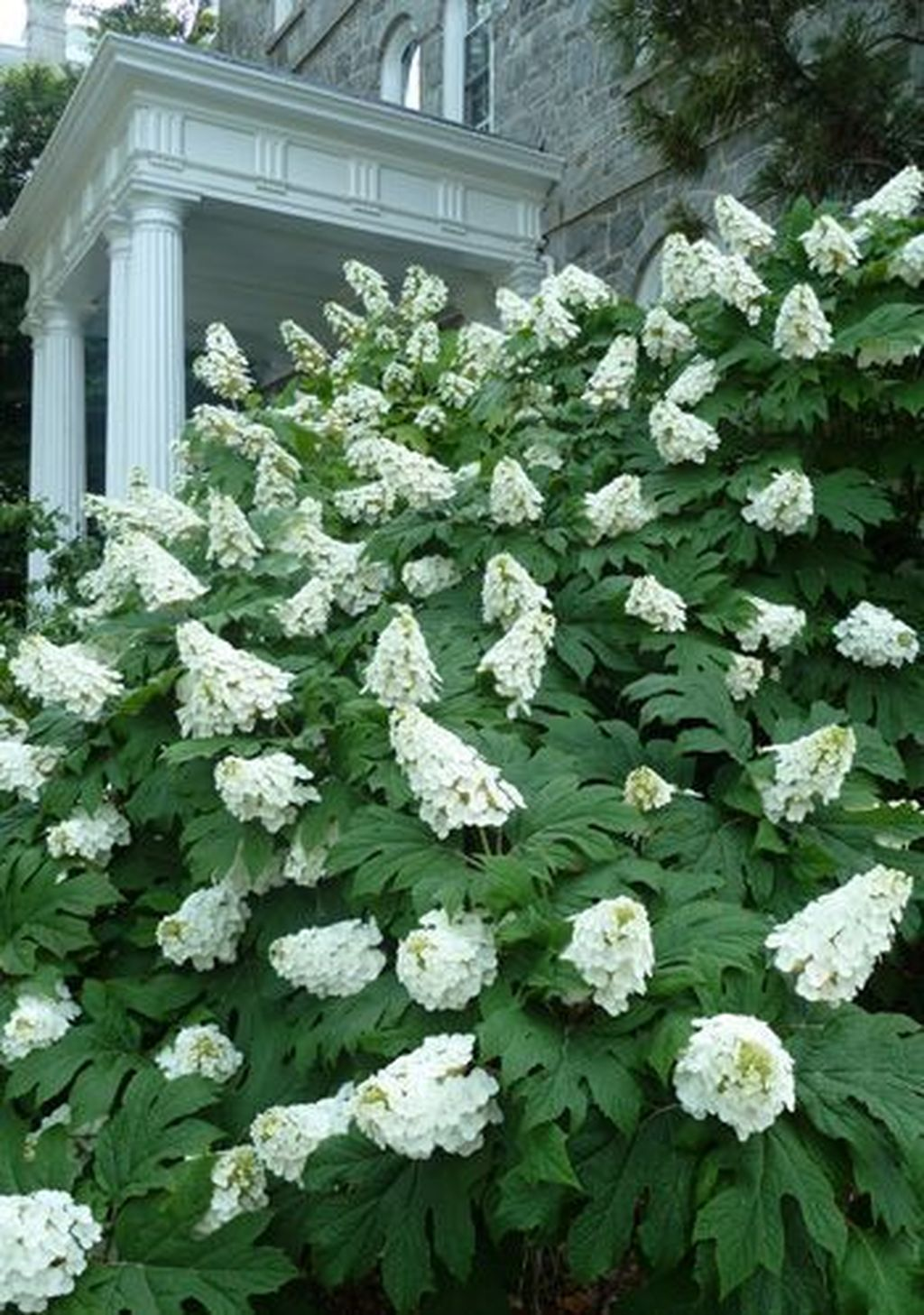 Beautiful Hydrangea Design Ideas Landscaping Your Front Yard 30