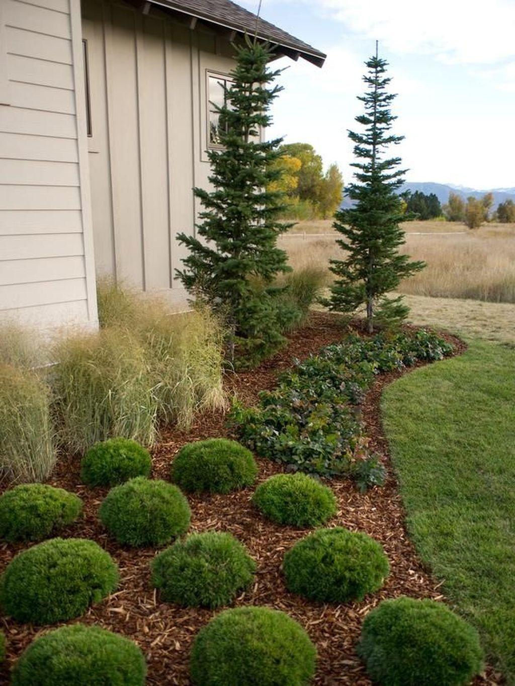 Wonderful Evergreen Landscape Ideas For Front Yard 09