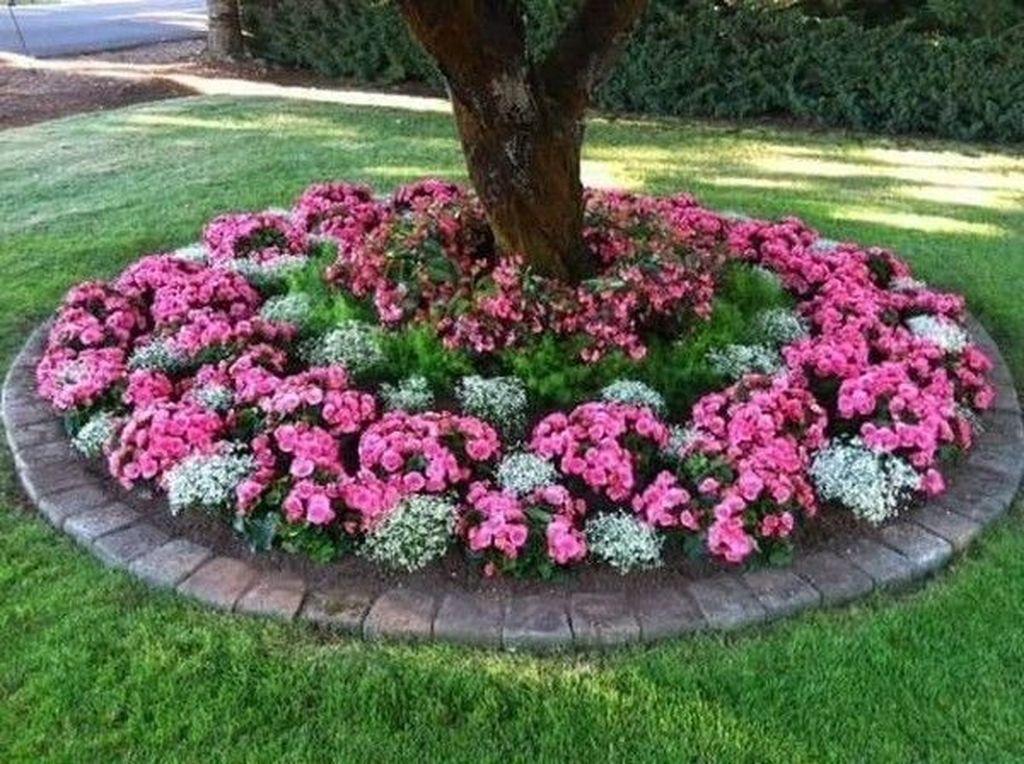 Wonderful Evergreen Landscape Ideas For Front Yard 13