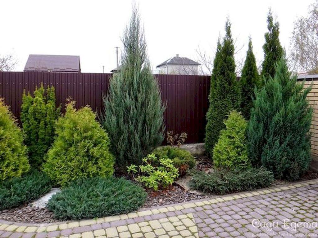 Wonderful Evergreen Landscape Ideas For Front Yard 14