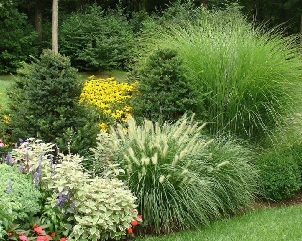 Wonderful Evergreen Landscape Ideas For Front Yard 24