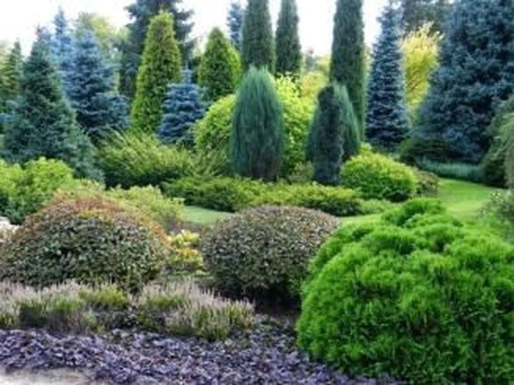 Wonderful Evergreen Landscape Ideas For Front Yard 28