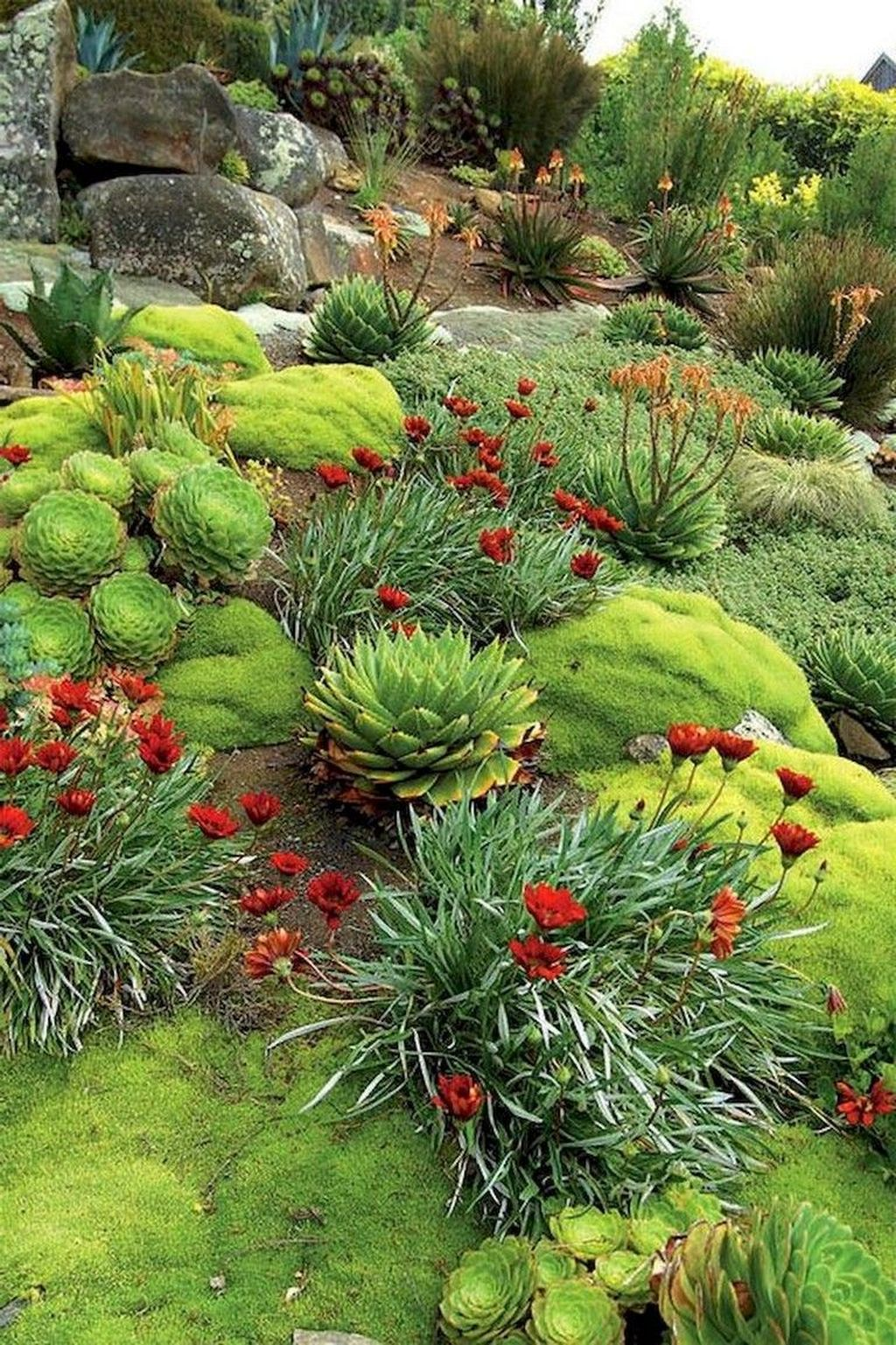 Awesome Succulent Front Yard Landscaping Ideas 24